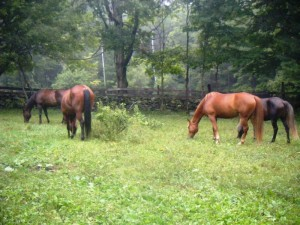 Star, Paul E, Red Cloud, Whisper 8-12-12